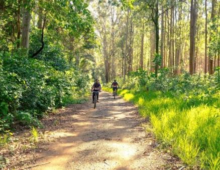 De ideale plek voor mountainbikers in de hoge venen